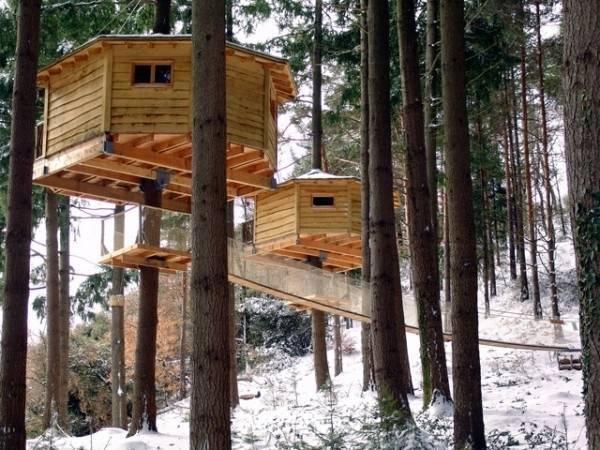 for Hotel con casas colgadas de los arboles