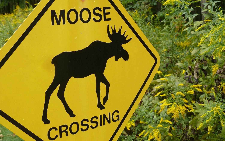 Moose Test ��¹���ԣ�Porsche Macan �����