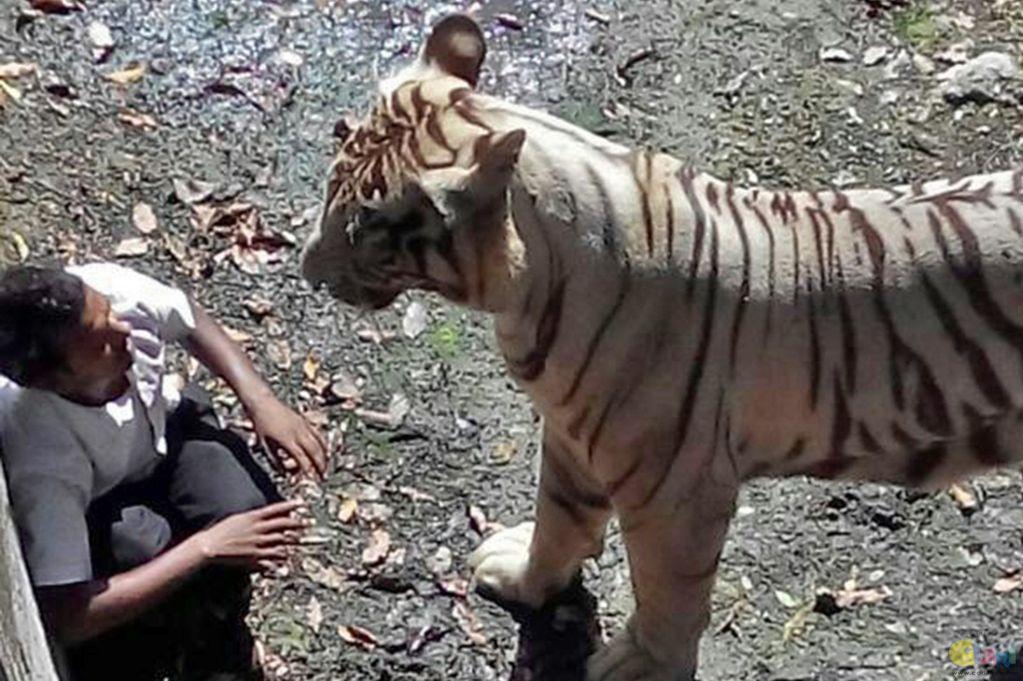 Video Harimau Bunuh Budak Menjadi Viral