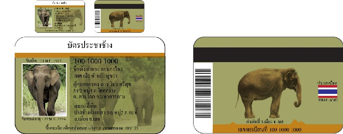 Gajah Jugak Ada Ic Di Thailand