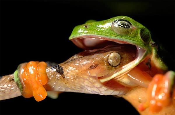 Gambar Menarik Haiwan Yang Sempat Dirakam Lensa Kamera