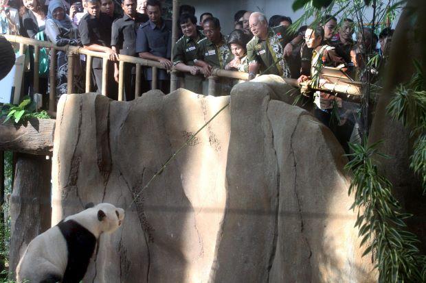 Image result for Gambar anak panda nak balik China