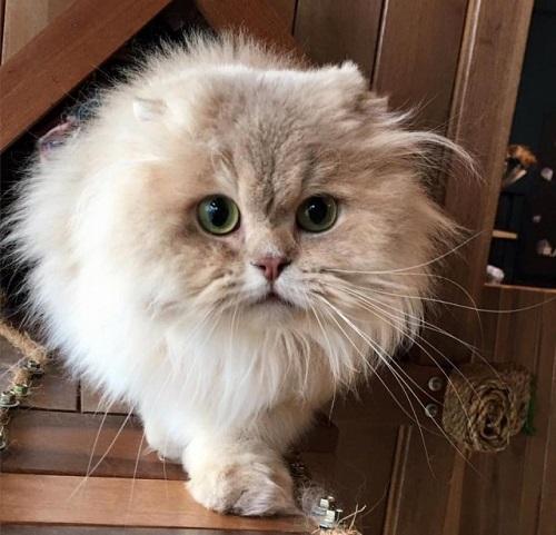 Johanandhiscats Pencinta Si Bulus Jom Ke Studio Kucing
