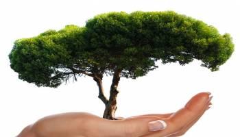 快速减压方法,什么?!专家研究看树6分钟就能身心平静