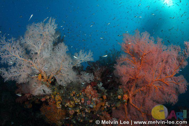 tiger reef