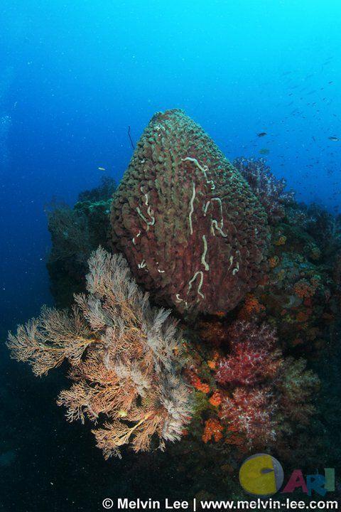 bahara rock