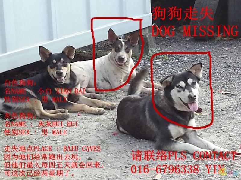 dog missing.jpg