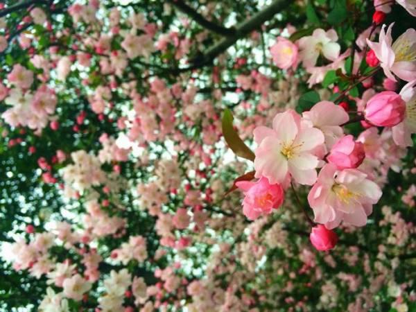 三月花兒盛開,為杭州添妝_副本.jpg