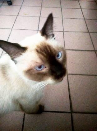 蓝眼猫男孩