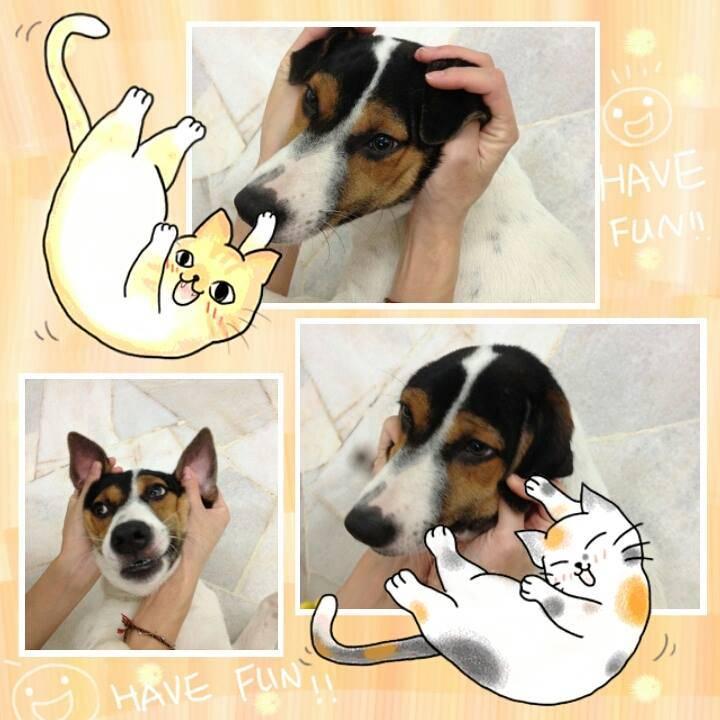 beagle>mongrel>jack russel
