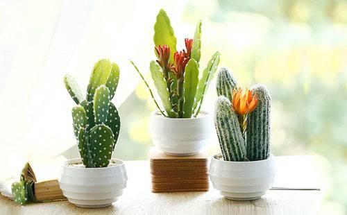 住宅巧摆绿色植物增添财运