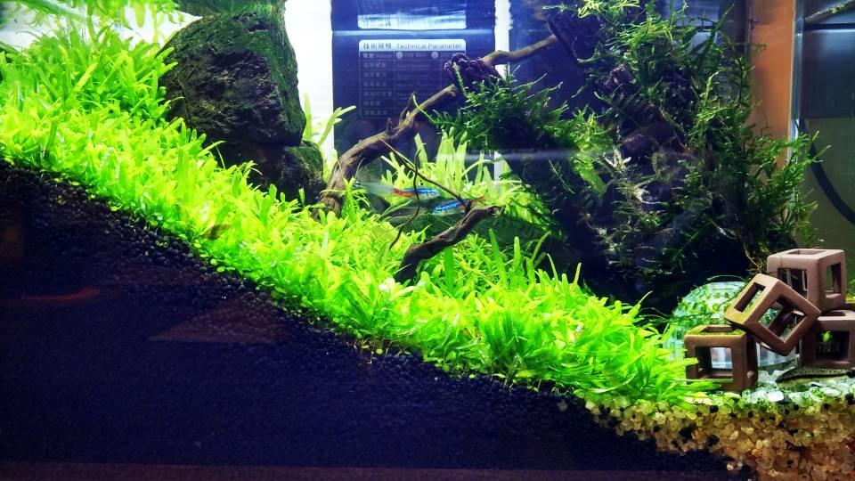 植物慢慢长大。鱼却慢慢的减少。是缺氧?
