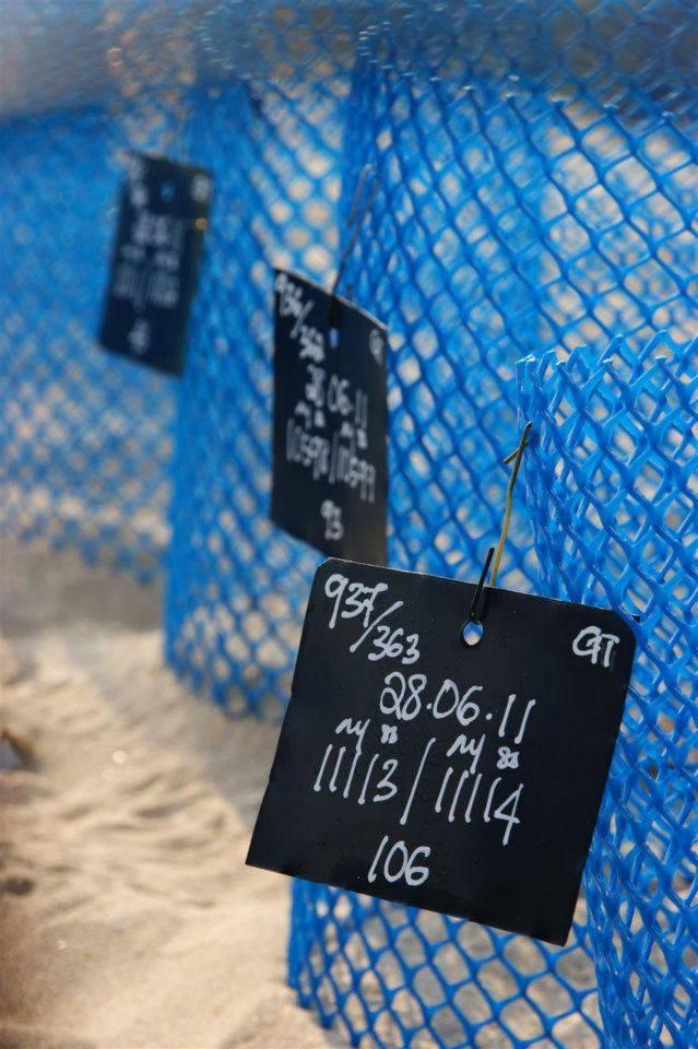 海龟蛋都有明确的记录卡