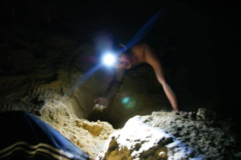 本人亲身把新鲜出炉的海龟蛋挖出来