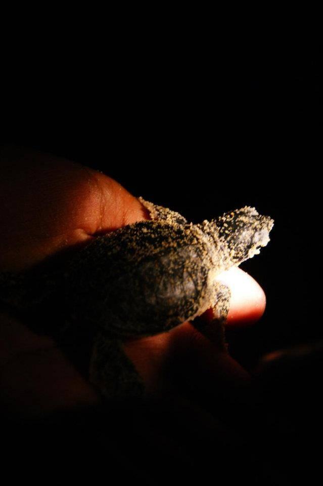 刚出世的小海龟被装备放回大海了