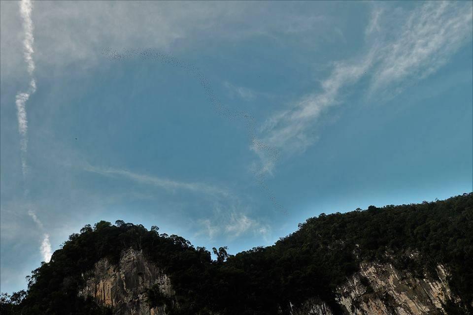 蝙蝠群飞出洞外壮观的情景
