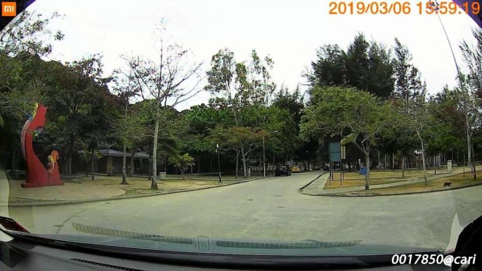 FILE190306-155901-000169.MP4_snapshot_00.16.968 copy.jpg
