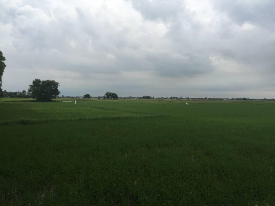 看着这一片大大的稻田。。。