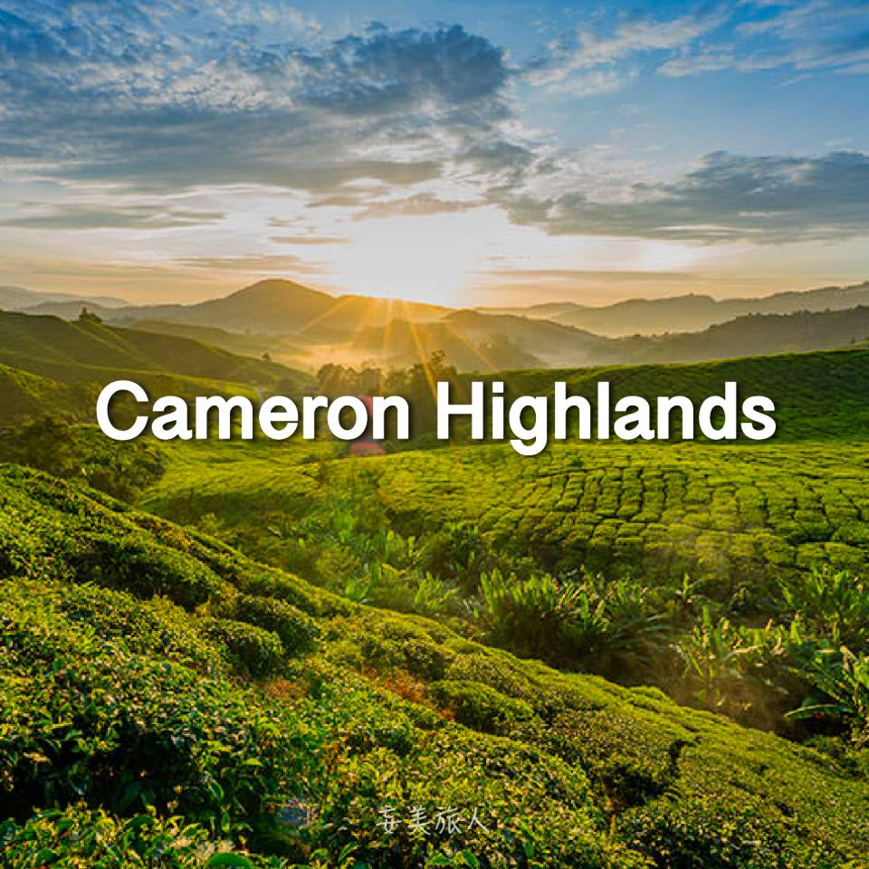 金马伦高原 Cameron Highlands