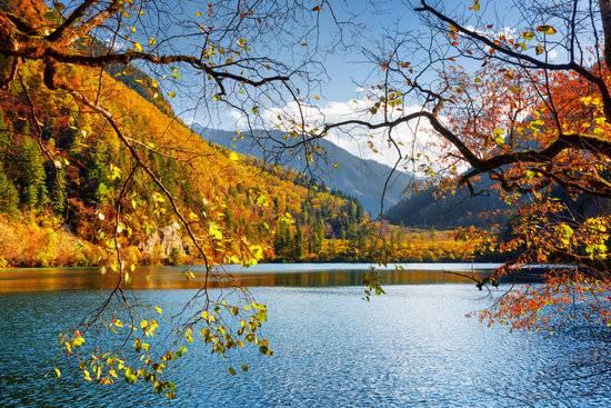 canva-panda-lake-among-fall-forest-MAC26jRSoik.jpg