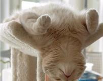 猫的各种可爱睡姿