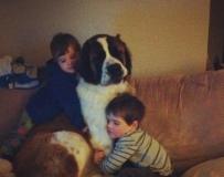 一只圣伯纳犬迷失归家后孩子的表情