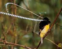 20种世间罕见的美丽鸟儿