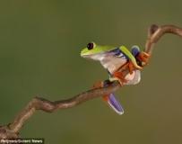 精緻又迷人! 樹蛙斑斕的「彩色套裝」