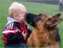 """25张证明""""让狗狗陪伴在小孩身边是最正确的决定""""照片!"""