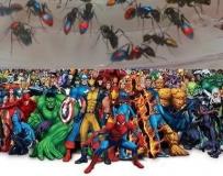 我养的 X-MAN 系列(彩色蚂蚁)