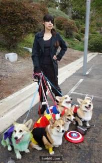29张柯基犬的照片,保证让你立刻疯狂爱上它们。