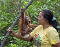 婆罗洲的红毛猩猩孤儿