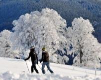 雪白的冬季。。。