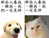 猫和狗的内心思想