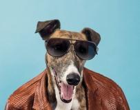 狗狗变身模特穿潮服掀时尚新潮流