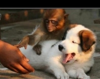 這位先生請不要碰我的狗!