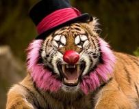 马戏团小丑的搞笑宠物