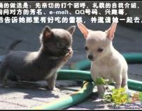 小狗社交第一堂课