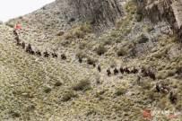 新疆民兵騎兵連