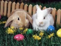 毛茸茸的可爱兔兔