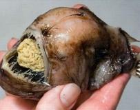 世界上最丑陋和最可怕的鱼,你见过吗!