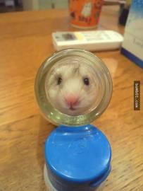 小仓鼠比人类还强的防地震本能!