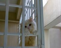 我家邻居的猫  好可怜..