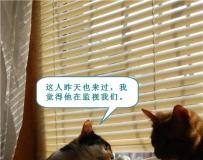 假如猫咪会说话 之 搞笑篇 (= ̄ω ̄=)