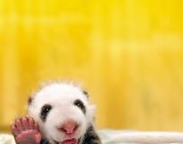 """动物们的""""真情告白""""和全世界一起说Hi"""