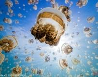 梦幻如画 美女潜水家与数千万水母同游自拍