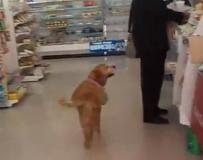 黃「精」獵犬! 聰明狗狗輕鬆購物一把罩