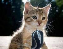 喵:老師)))))))))))) 我抓到老鼠了