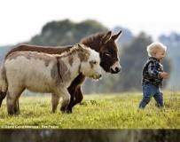 原来驴子这么可爱