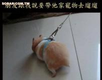 那天陪朋友去遛寵物,當他準備好時我都傻眼了!